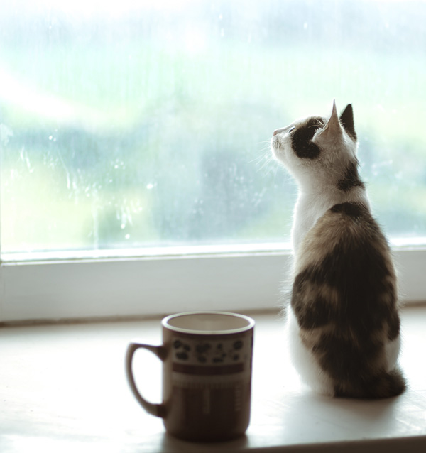 shutterstock_cat sitting on window sill